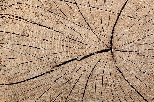 Wood, Trunk, Rings, Tree, Forestry, Lumber