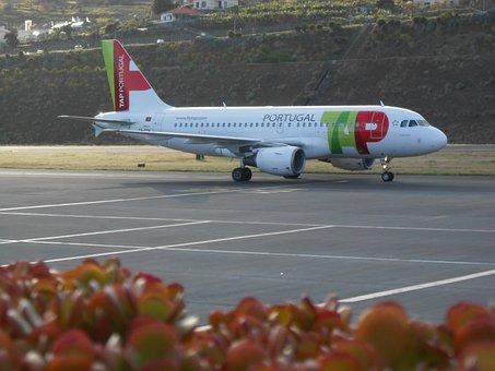 Miguel Toga, Airport, Timber Airport, Wood, Santa Cruz