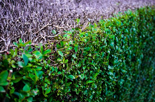 Abstract, Background, Bush, Close, Ecological, Ecology
