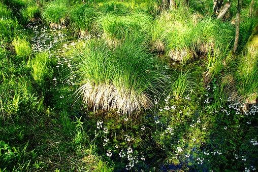 Forest, Darß, Spring, Bach, Aquatic Plants, Grasses