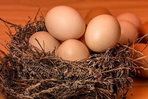Crowded, Nest, Egg, Full, Overflowing, Overcrowded