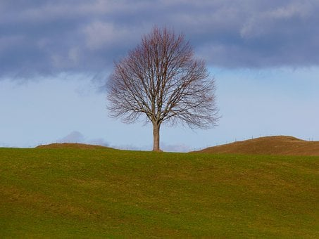 Tree, Individually, Nature, Meadow, Sky, Still Life