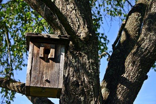 Nesting Box, Tree, Nature, Aviary, Nesting Place