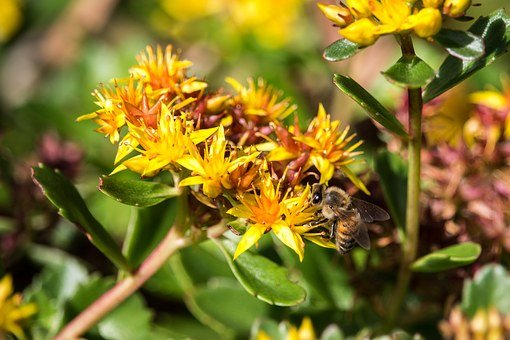 Bee, Yellow, Flower, Pollination, Nature, Insect
