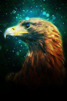 Eagle, Head, Golden, Eye, Gliding, Fly, Feathers, Bird