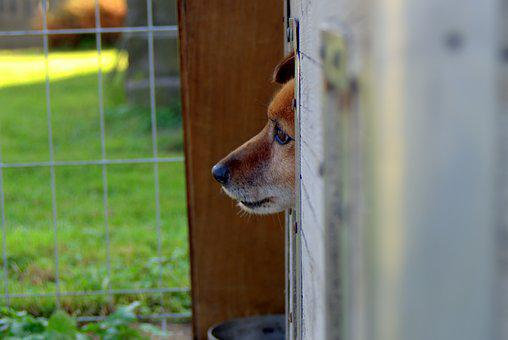 Animal Shelter, Dog, Sad, Hut, Longs, Pet, Waiting