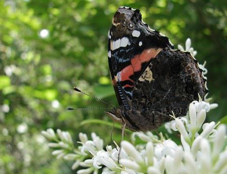 Butterfly, Summer, Flowers, Nature, Spring, Wings