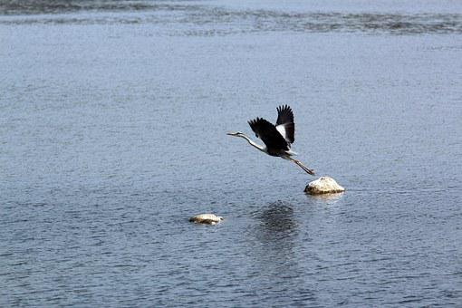 New, River, Birds, Outdoor, Nature, Animal, I