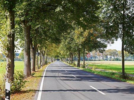 Road, Avenue, Münsterland, Germany, Frühherbst, Emerge