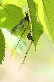 Dragonfly, Larva, Hatched, Insect, Dragonfly Larva