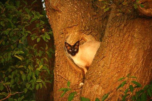 Cat, Mieze, Kitten, Tree, Road, Hiding Place