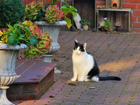 Cat, Domestic Cat, Pet, Cat's Eyes, Mieze, Sit, Waiting