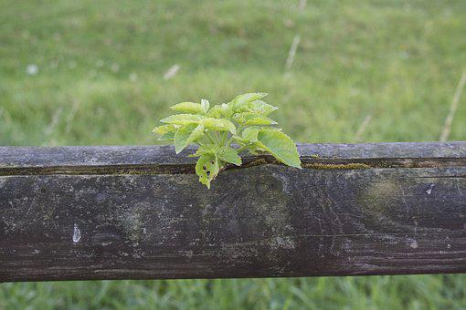 Plant, Wooden Beams, Fence, Plant Fence, Nature, Green