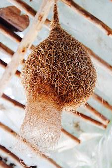 Nest, Bird's Nest, Hatching, Nesting Place, Breed