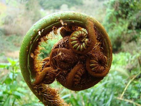 Fern, Plant, Garden, Nature, Tree-fern, Flora, Botany