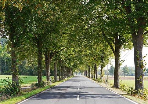 Road, Lindenallee, Münsterland, Frühherbst, Route