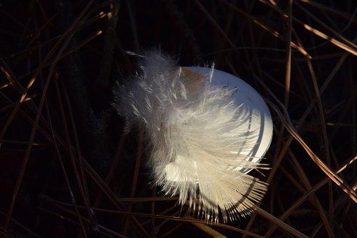 Spring, Bird Feather, Fluff, Eggshell, Bird's Nest
