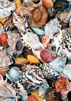 Shell, Mussels, Colorful, Karikik, Color, Chaos