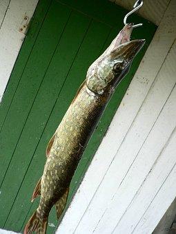Pike, Fishhook, Fish, Fishing, Suspended, Hanging, Food