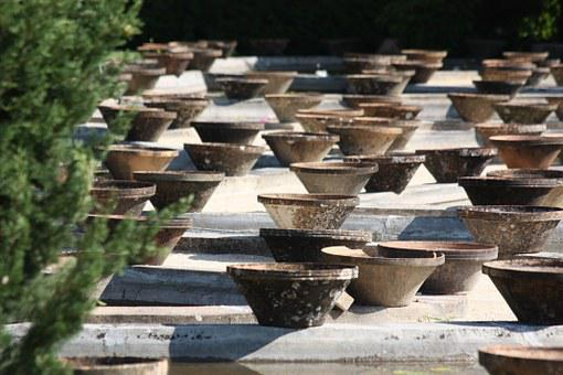 Pots, Water Lily, So Much