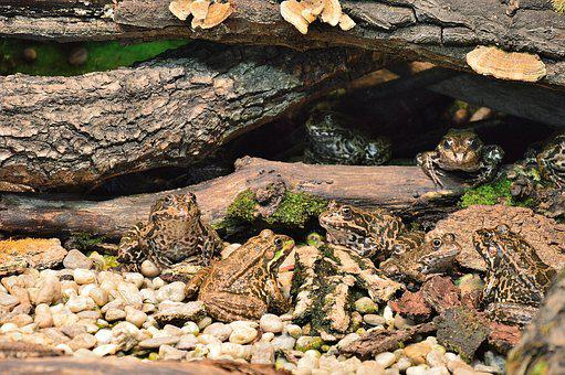 Frog, Innsbruck, Alpine Zoo, Zoo