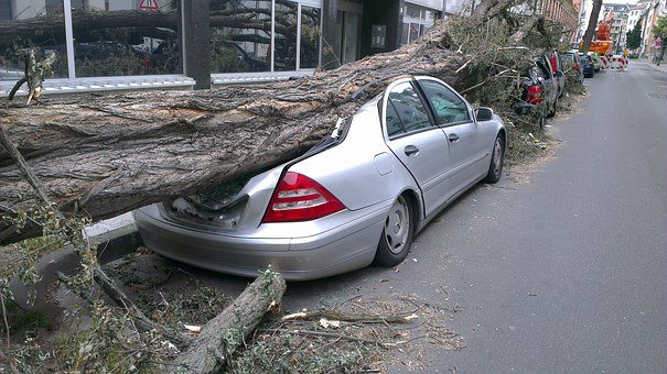 Fallen Tree, Auto, Forward, Tornado, Damage, Insurance