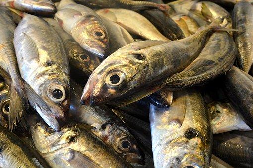 Fish, Sardine, Portugal, Canned, Cod