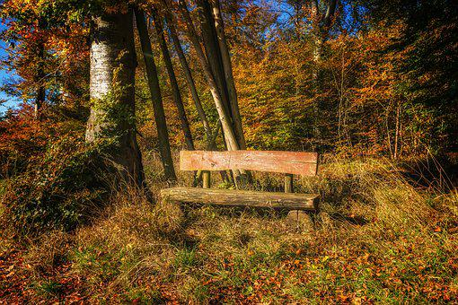 Bank, Forest, Nature, Rest, Silent, Autumn, Bench