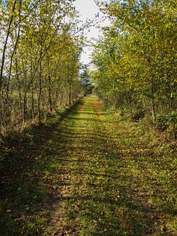 The Path, Forest, Autumn, Nature, Spacer, Tree, Grass