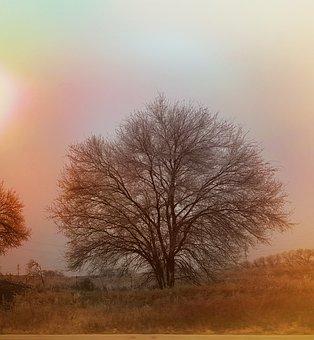 Harvest, Tree, Solitude, Autumn