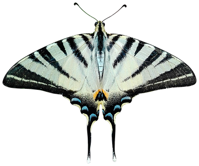 Butterfly, Png, Transparent, Ali, Moth, Papilionidae