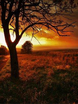 Sunset, Tree, Scenery, West, Nature, Landscape