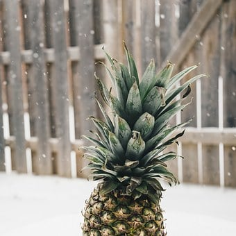 Pineapple, Snow, Winter, Random, Food, Healthy, Funny