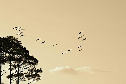 Birds, Formation, Flying, South, North, Migration