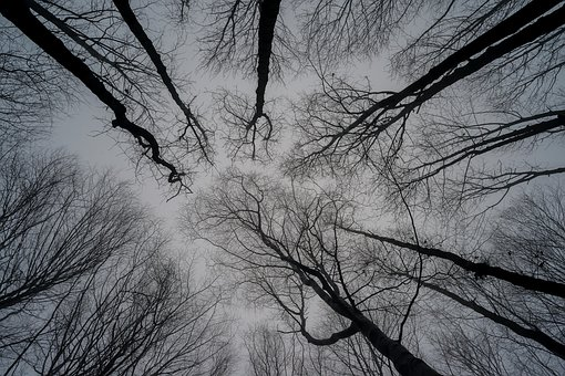 Trees, Sky, Nature, Winter, Branches, Fog, Look At Sky