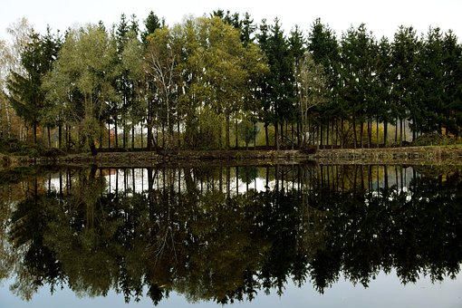 Lakeside, Mirroring, Trees, Landscape, Green, Water