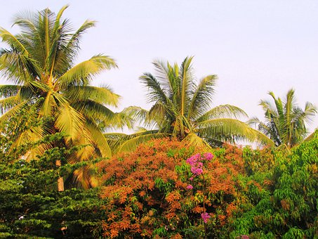 Park, Sadhankeri, Trees, Palms, Coconut, Flowering