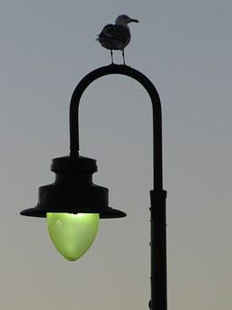 Lantern, Bird, Sky, The Green Light, Sulhouette