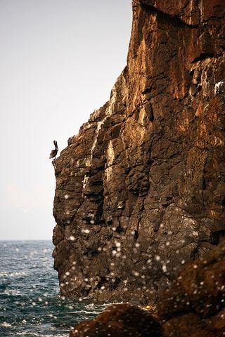Pelican, Bird, Birds, Mexicanbird, Natural, Landscape