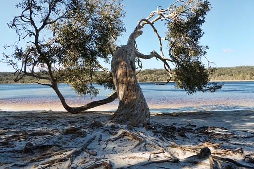 Tree, Twisted, Nature, Brown Lake, Roots, Trunk, Leaves
