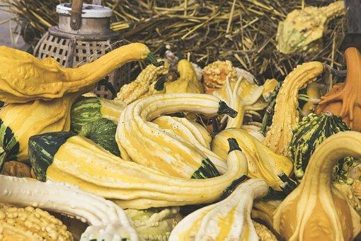 Pumpkin, Fruit, Vegetables, Orange, Choose, Large, Huge