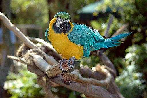 Macaw, Parrot, Bird, Colorful, Nature, Animal, Tropical