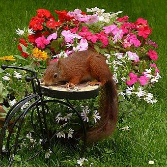 Mammal, Squirrel, Sciurus Vulgaris Major, Garden