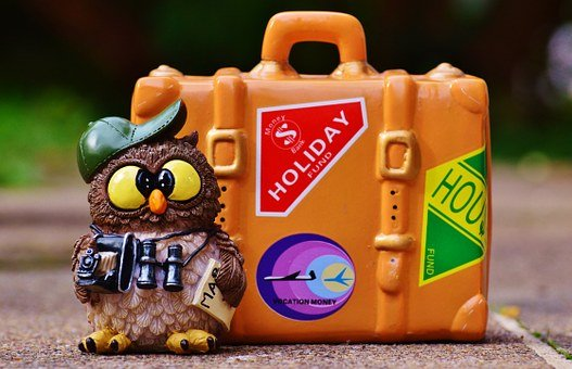 Owl, Tourist, Map, Binoculars, Camera, Travel, Holiday