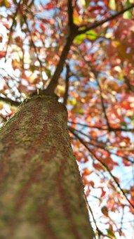 Tree, Autumn, Leaves, Fall Color, Nature, Upward