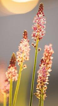 Flower, Upward, Fight, Enterprising, Hard Work, Plant