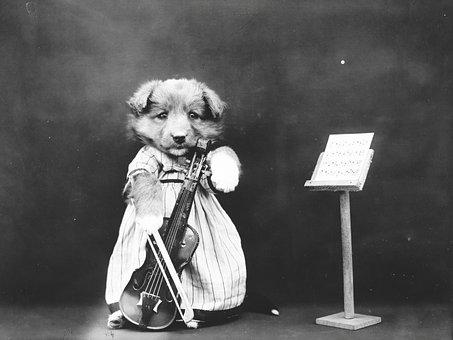 Dog, Puppy, Dressed, Clothed, Violin, Cute, Vintage