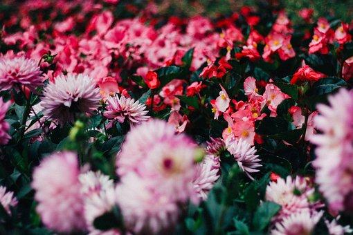 Beautiful, Bloom, Blooming, Blossom, Blur, Bright