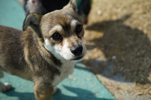Puppy, Dog, Animal, Stare, Consensus, Walk, Park