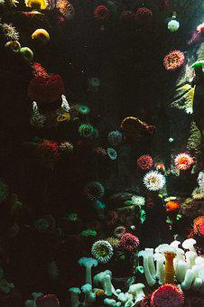 Anemone, Aquarium, Art, Color, Coral, Decoration